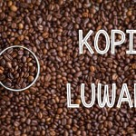 10 Best Places to Try Luwak Coffee in Indonesia