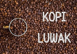 10 Best Places to Drink Luwak Coffee