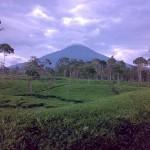 Wonosobo, a Peaceful City between Mount Sindoro and Mount Sumbing
