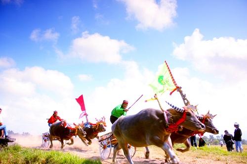 Makepung Bulls Race Festival